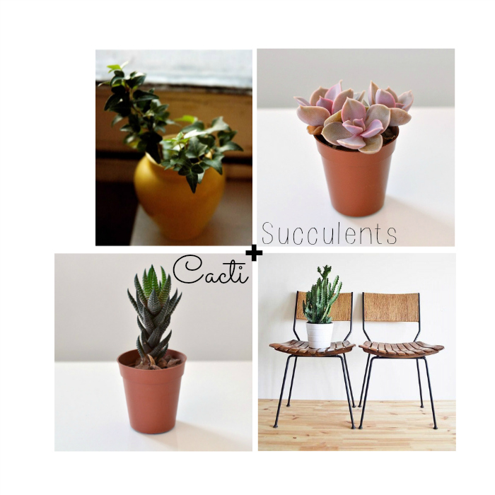currently-craving-succulents